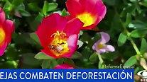 Conservación Internacional Colombia  - Abejas combaten la deforestación