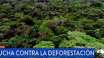 Conservación Internacional Colombia - Lucha contra la deforestación