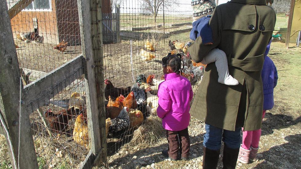 Real World, Food Education