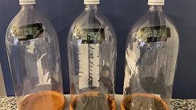 Lesson 3 T1 Unheated Bottle