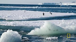 Lesson 1 Adélie Penguins