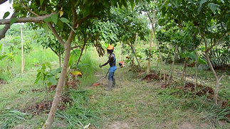 Lesson 11 Agroforestry in the Ivory Coast