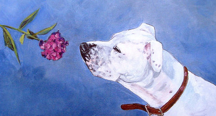 Pet Portraits by Tianna Fisher