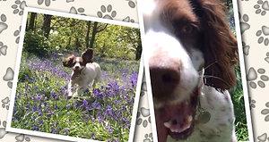 Caroline's Dog Saffron