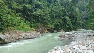 EXPLORE THE SUMATRAN RAINFOREST IN AN ETHICAL WAY