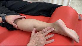 長・短腓骨筋の触擦とマニュアルセラピー