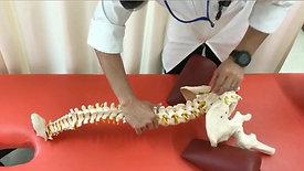 急性腰痛に対する初期対応(腰椎骨盤の誘導)