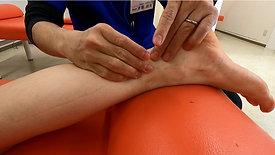 下腿後面の触察術