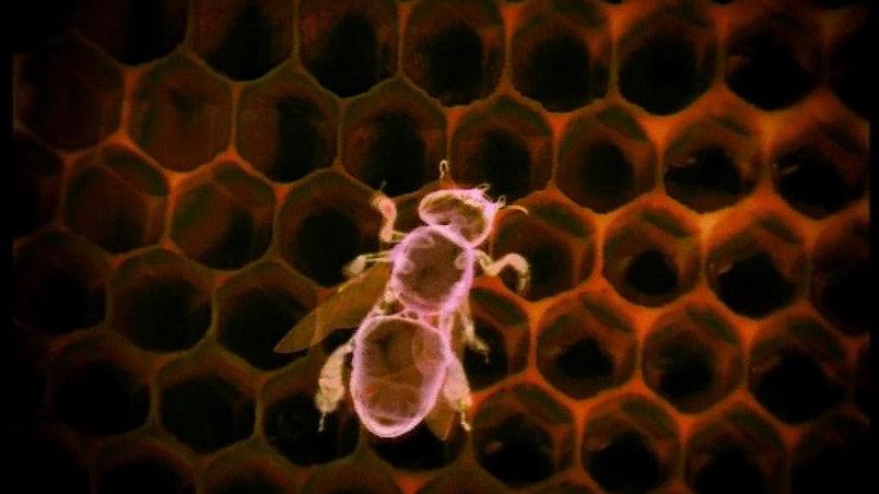 Credit Suisse 'Bees'