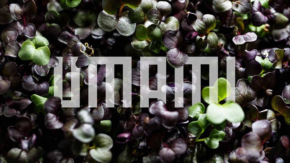 UMAMI | Teaser