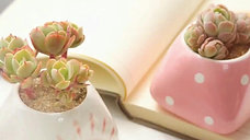 Cute Succulent Pots