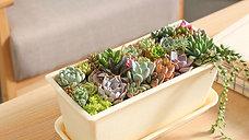 30 Succulents in a pot