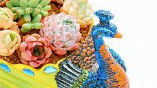 Exotic Succulents - Phoenix