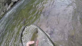 Netting a fish