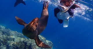 LAPAZ Sea Lion Tour