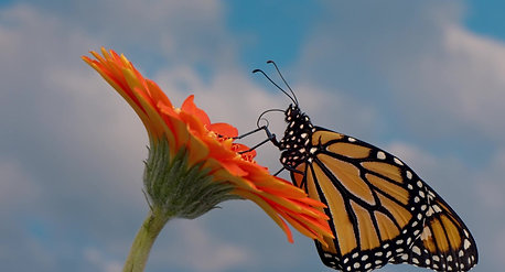 Monarch Movie