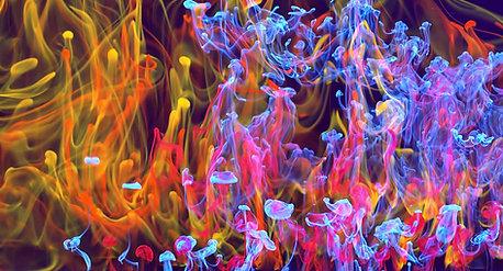 Neon Liquid Smoke -Three