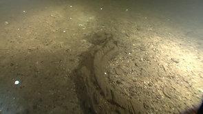 Нептун репортаж короткий