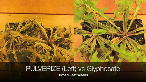 Pulverize Weed & Grass Killer vs Glyphosate
