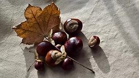 Chestnut Celebration