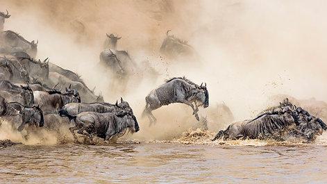 Safari Highlights Video