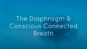 Conscious Connected Breath and the Diaphragm