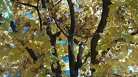 Fall Color Wind