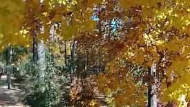 Fall Color Walk