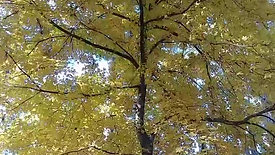 Fall Color Yellow Wind