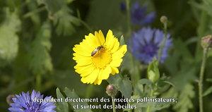 BeeOdiversity