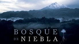 Bosque de Niebla. Huatusco, Ver.