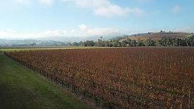 Clip 2 - Yarra Valley Mandala Wines