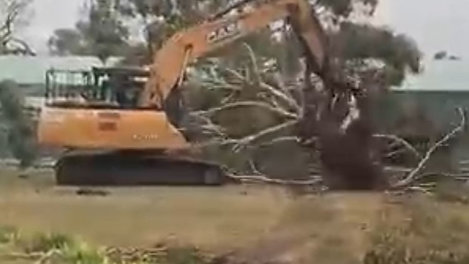 Large Tree Removal Projects