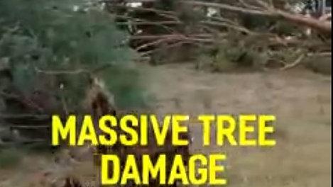 Emergency Tree Service - Multiple Tree Falls