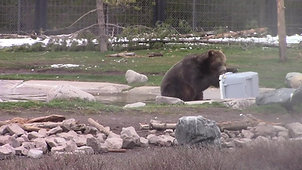 sorry_bears