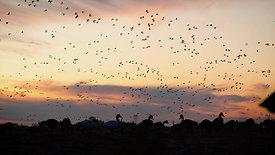 Last Hunt Geese Sunrise