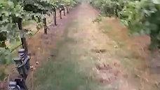 Race through Grapes