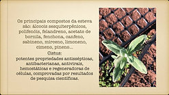 OEs_Portugal_2:3