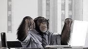 Glass Spider Publishing - Monkey Business
