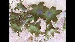 Use Me [Vaporwave]