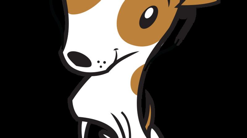 Terrier Livestream