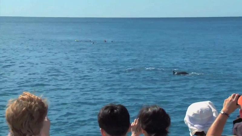 Ocean Joy Cruises Tour Preview