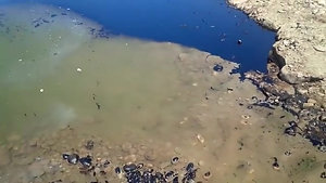 Desintegrar Hidrocarburo en Agua