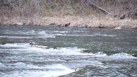 Leaf River #2