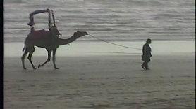 Karachi Camel