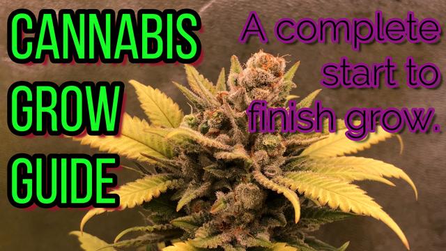 Cannabis Grow Guide: A Seed to Harvest Grow