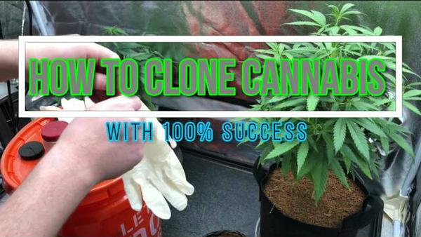 How to Cannabis Tutorials