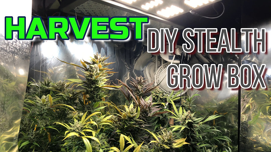 DIY Stealth Grow Box, Medical Cannabis Grow Series Featuring Gorilla Bomb and Green Crack