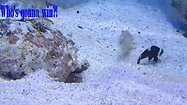 What's going on at Seaside Tropical Fish Store - Huntington Beach, CA