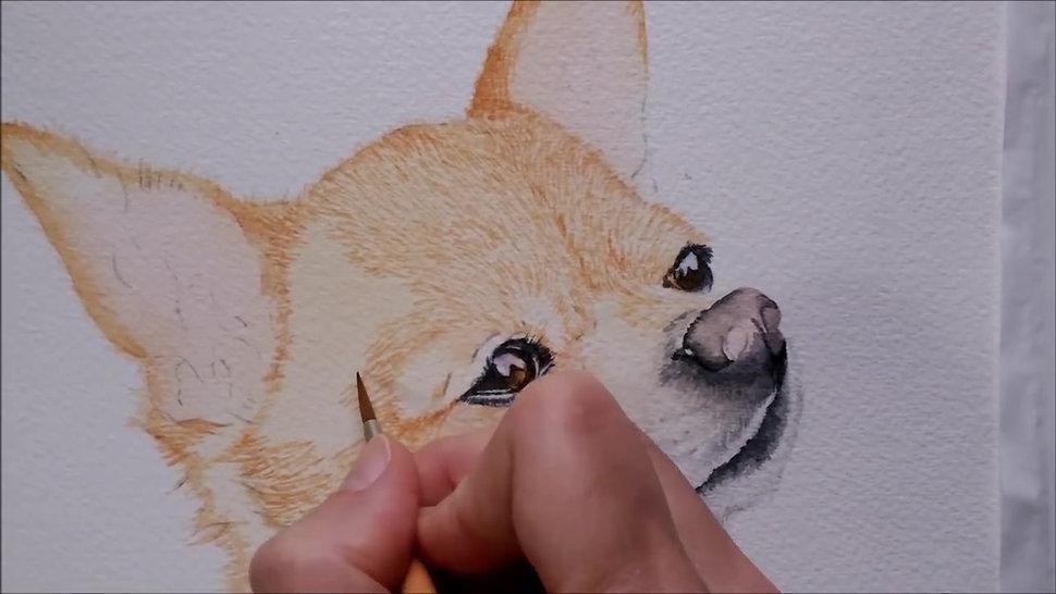 Watercolor Painting Tutorial -  Chihuahua Dog